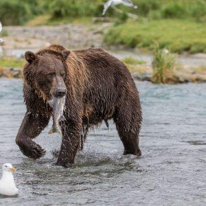 day trips, bear viewing, kenai